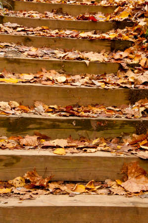 smokies: Wooden steps covered with fallen leaves,