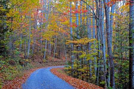 Beautiful country road in fall colors. Stock Photo