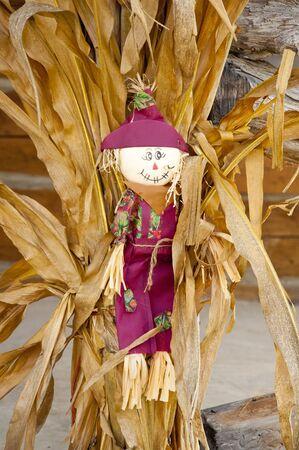 decorates: Scarecrow decorates corn stalks in fall. Stock Photo