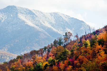 great smokies: Changing seasons from fall to winter.