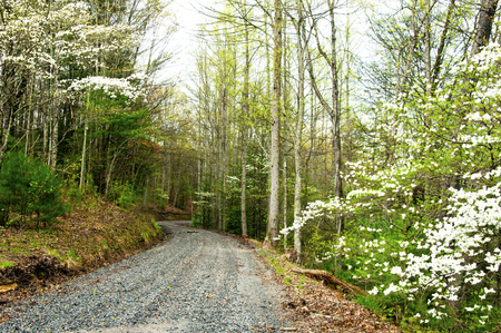 the smokies: Dogwood blooms surround a country road. in the Smokies. Stock Photo