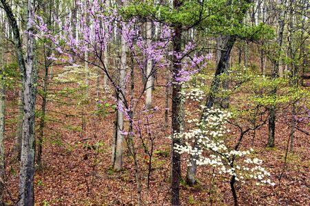 smoky mountains: Smoky Mountains in spring blooms. Stock Photo