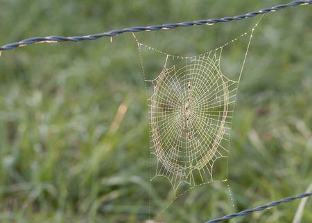 dewey: Dewey spider web hangs on a barb wire fence.