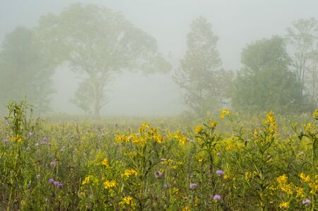 homesteads: Fog lays over a field of wildflowers in Cades Cove.