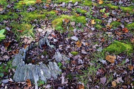greenery: old log and surrounding greenery.
