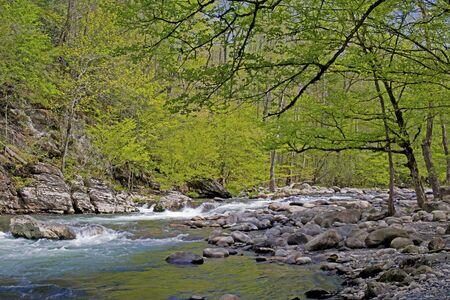 smokies: Corriente de agua blanca en primavera en las Monta�as Humeantes.