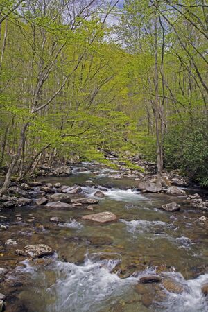 smoky mountains: White water streams in spring - Great Smoky Mountains. Stock Photo