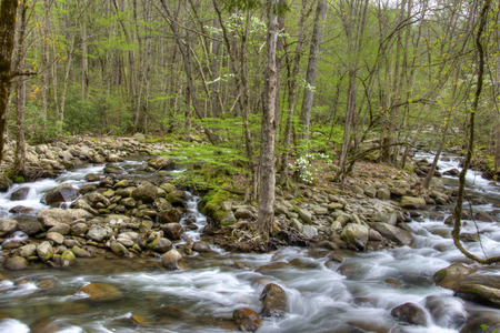 great smokies: Beautiful white water stream in the Smokies in spring.
