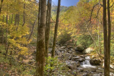 smoky mountains: Beautiful fall scenic in the Smoky Mountains.