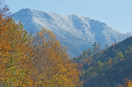 the smokies: Orange trees before a snow capped mountain in the Smokies. Stock Photo