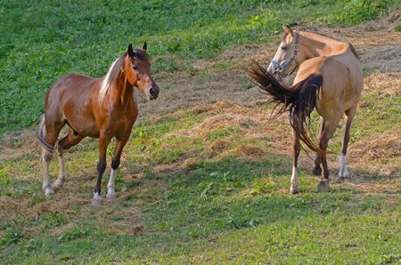 to seem: Two horses seem to communicate.
