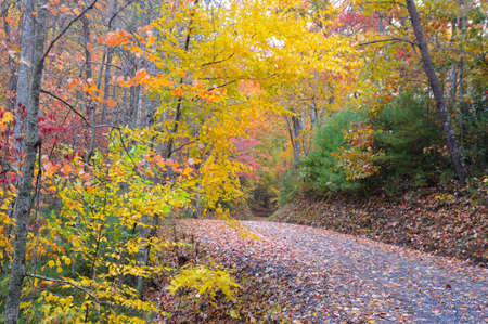 smokies: Beautiful mountain road surrounded by fall colors.