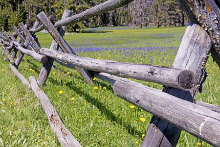 fenceline: Scenic split rail fence and wildflowers in bloom.