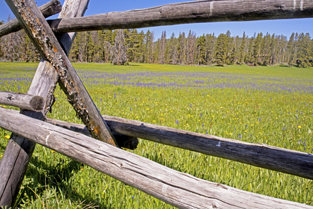 split rail: Close up split rail fence and treeline.