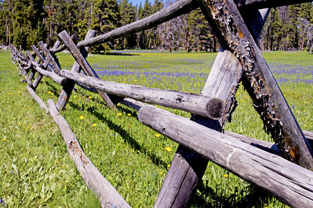 fenceline: Split rail fence and wildflowers in bloom.