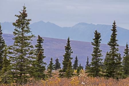 mountainscape: Mountainscape in Denali National Park in Alaska.