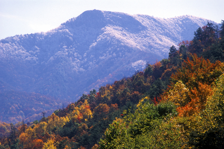 Changing seasons in the Smoky Mountains.