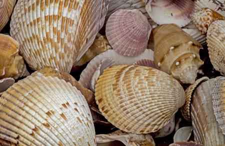 Close up seashells on the beach at Sanibel Island, FL. Stock Photo