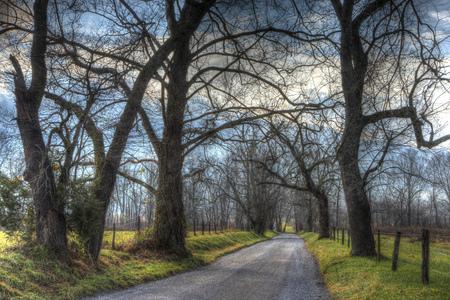 裸の木はケイズコーブの砂利道を囲んでいます。 写真素材 - 92199513