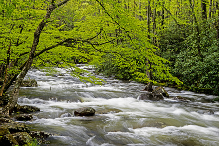 Greenery and white water creek in spring in the Smokies. Stock Photo