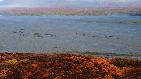 A braided river runs along fall colors in Denali National Park. Stock Photo