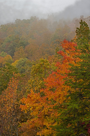 Vertical-Fall colors under a mountain of fog in the Smokies.