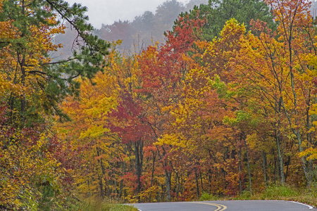 Fall colors along a scenic byway in the Great Smoky Mountains. 免版税图像