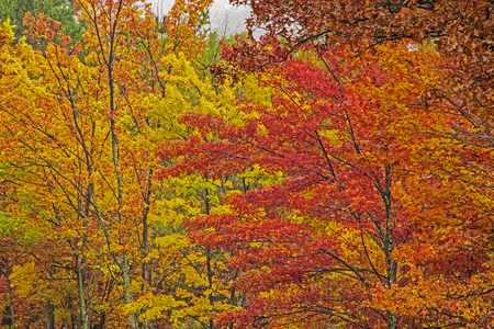 Brilliant red, yellow, green colors in the Smokies fall.