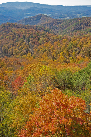 Vertical-fall colors in the Smoky Mountains.