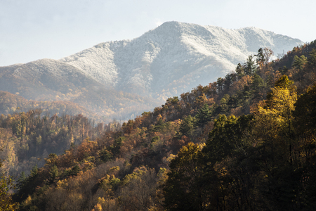 Fall colors and a snowy background in the Smoky Mountains.