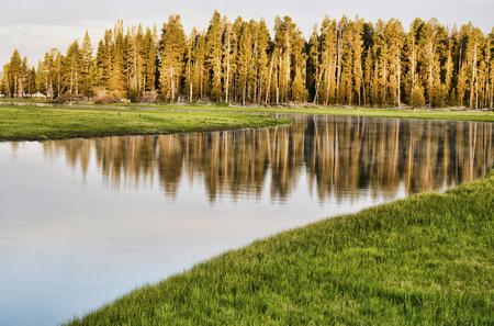 Water reflections in a still lake in Yellowstone.