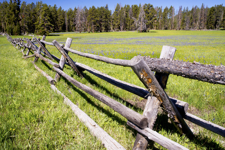 A split rail fence leading through a field of wildflowers.