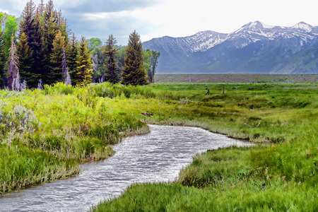 Snow runoff forms a small stream in the Grand Tetons.