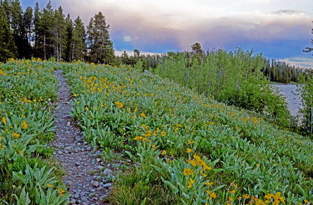 A path through wildflowers at dusk in the Grand Tetons.