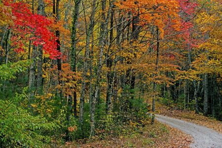 A mountain road surrounded with colorful leave in the Smokies.