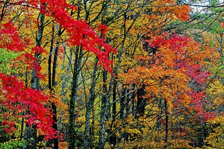 Autumn comes to the Great Smoky Mountains.