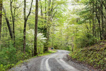 Dogwood Trees bloom along a lonely country road. Reklamní fotografie