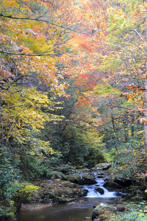 Small creek in the Smokies surrounded with fall colors.