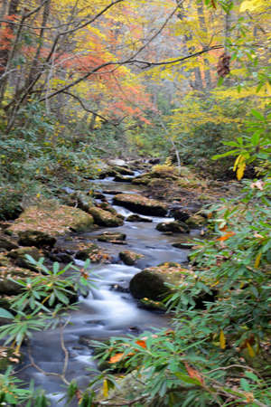 Small stream in the Smokies surrounded with fall colored leaves. Reklamní fotografie