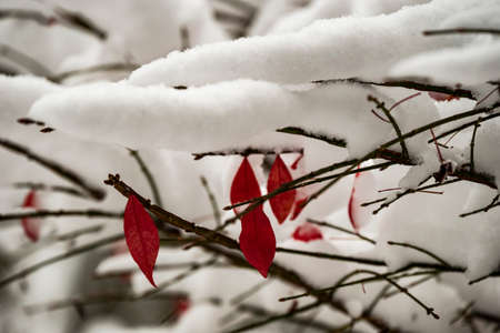 Changing seasons from fall to winter snows. Reklamní fotografie