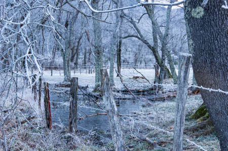 Cold, frozen small pond in Cades Cove early morning hours.