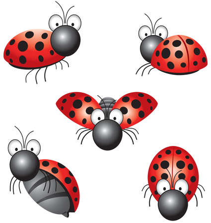 funny ladybird in different positions Vector