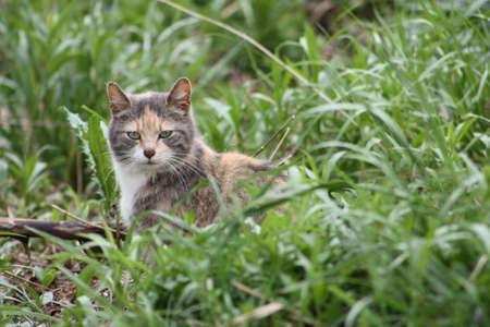 Mama Kitty Stock Photo