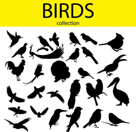 magpie: collection of silhouette of the birds Illustration