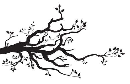 arbol: rama de un árbol