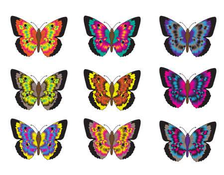 Set of multicolored butterflies on a white background, a collection of butterflies. Vector illustration