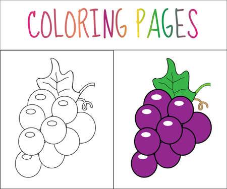 색칠하기 책 페이지. 포도. 스케치 및 컬러 버전. 아이들을위한 착색. 벡터 일러스트 레이 션 일러스트