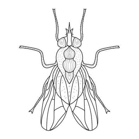 Fly insect sketch, doodle style. Line art. Vector illustration