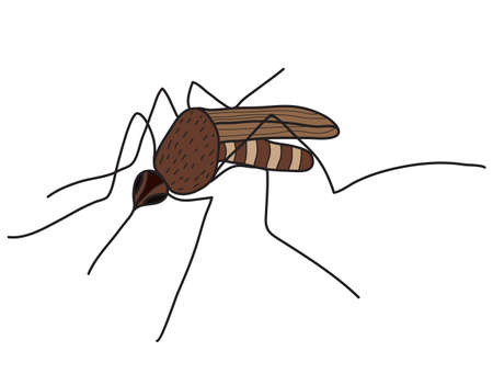 gnat: Cartoon color mosquito isolated on white background. Vector illustration Illustration