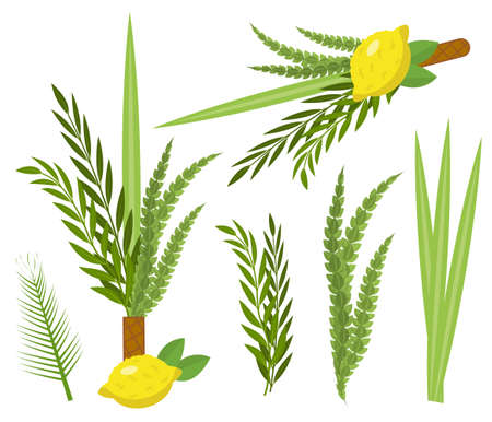 Happy Sukkot set. Collection of objects, design elements for Jewish Feast of Tabernacles with etrog, lulav, Arava, Hadas. Isolated on white background. Vector illustration